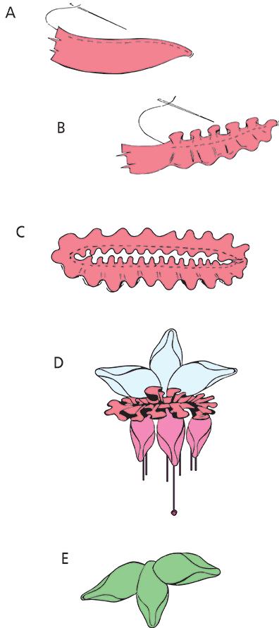Ribbon Fuchsia Flower